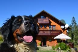 Penzión Dinda Strachan - Pes